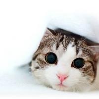 Niedliche Katze liebt den Catsomat Katzenfutterautomat